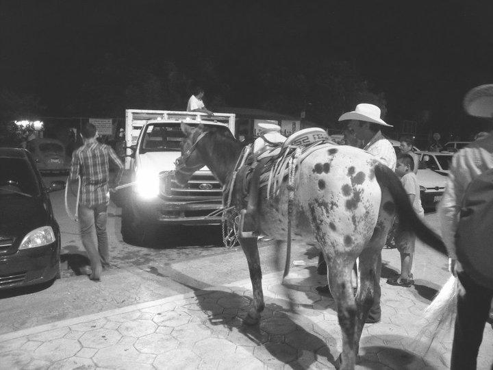 Hest i Mexico