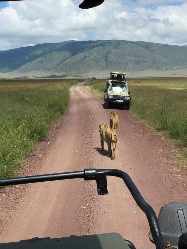 Vilde dyr på safari
